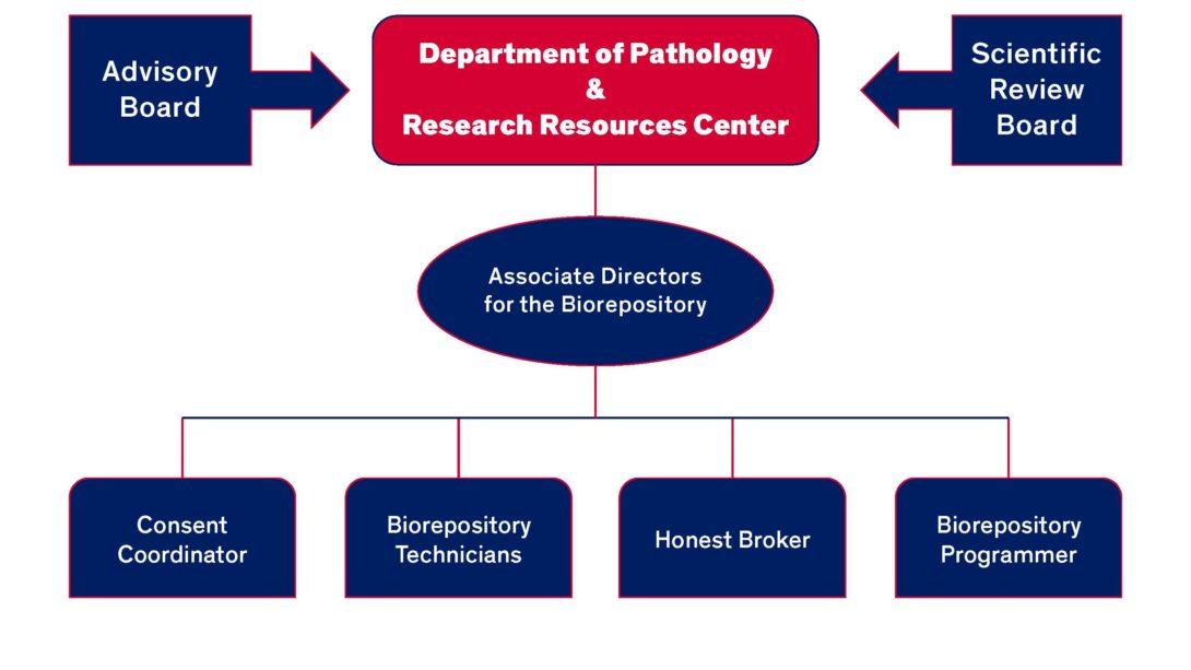 biorep org